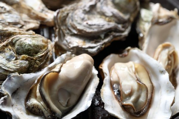 Mussel Monger oysters