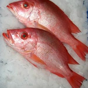 Fresh Seafood: Whole Red Roman SOLD OUT